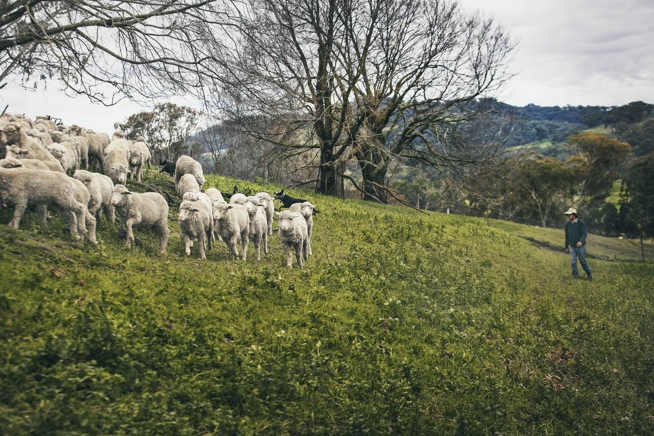 "Strategie pro kvalitu – koncept ""Sheep To Shop"" 33"