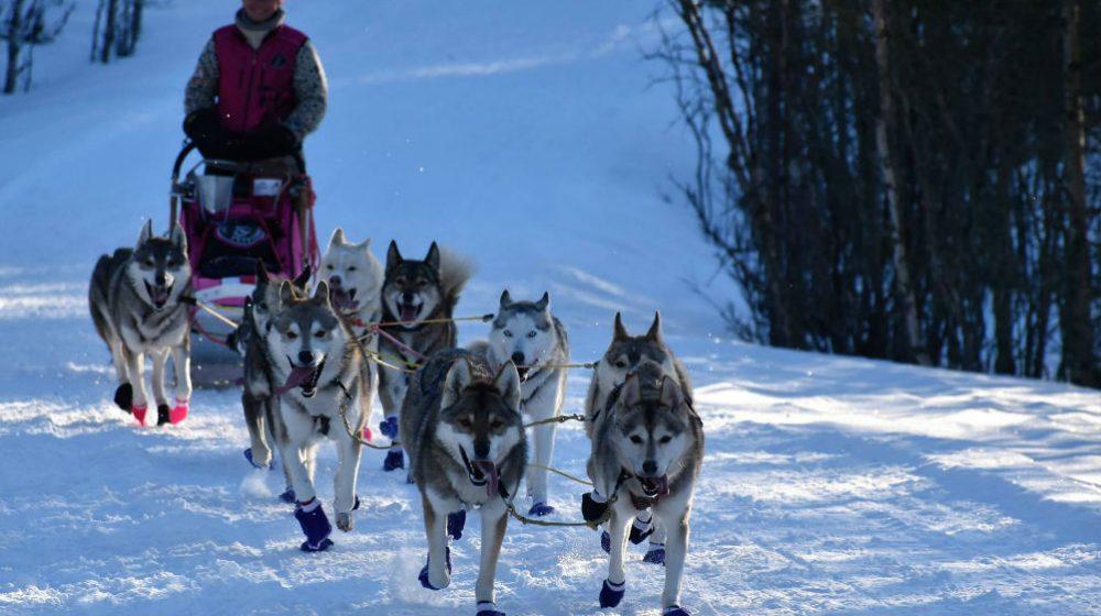 Nejdelší závod psích spřežení v Evropě startuje už tuto sobotu! 2