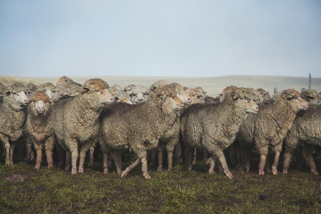 "Strategie pro kvalitu – koncept ""Sheep To Shop"" 23"