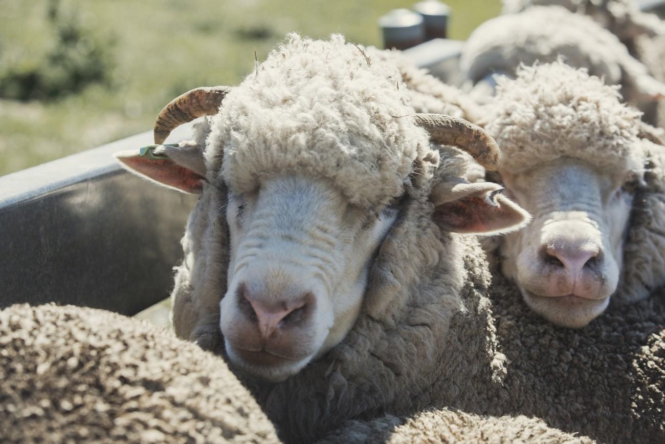 "Strategie pro kvalitu – koncept ""Sheep To Shop"" 28"