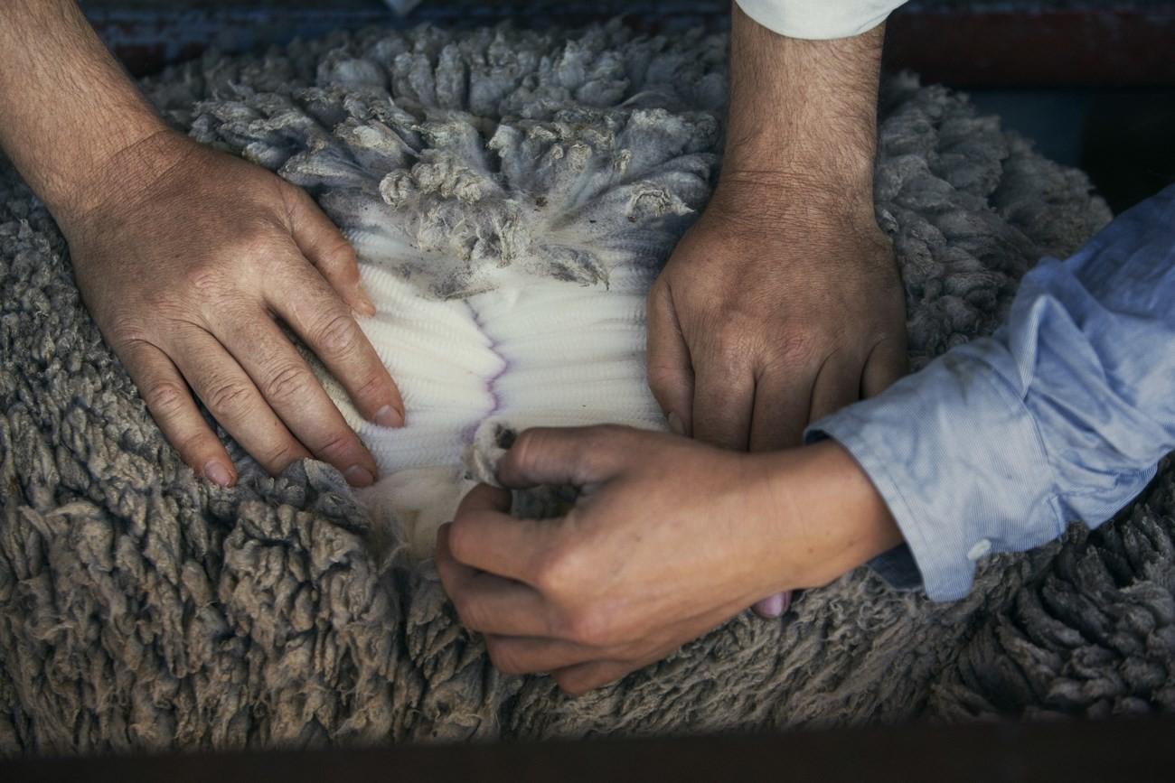 "Strategie pro kvalitu – koncept ""Sheep To Shop"" 35"