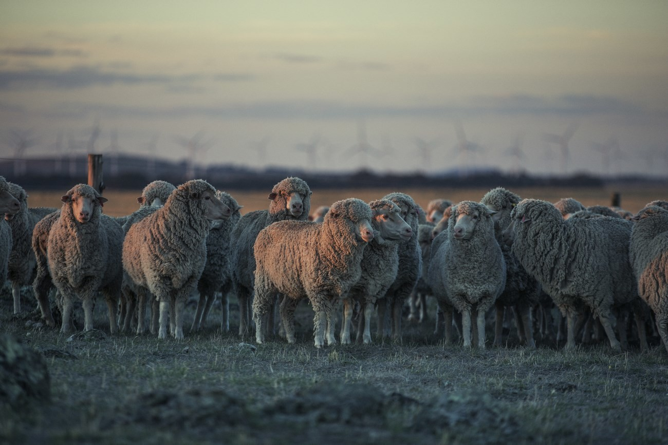 "Strategie pro kvalitu – koncept ""Sheep To Shop"" 39"
