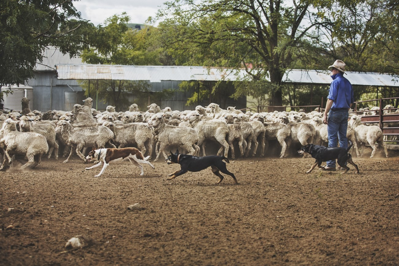 "Strategie pro kvalitu – koncept ""Sheep To Shop"" 15"