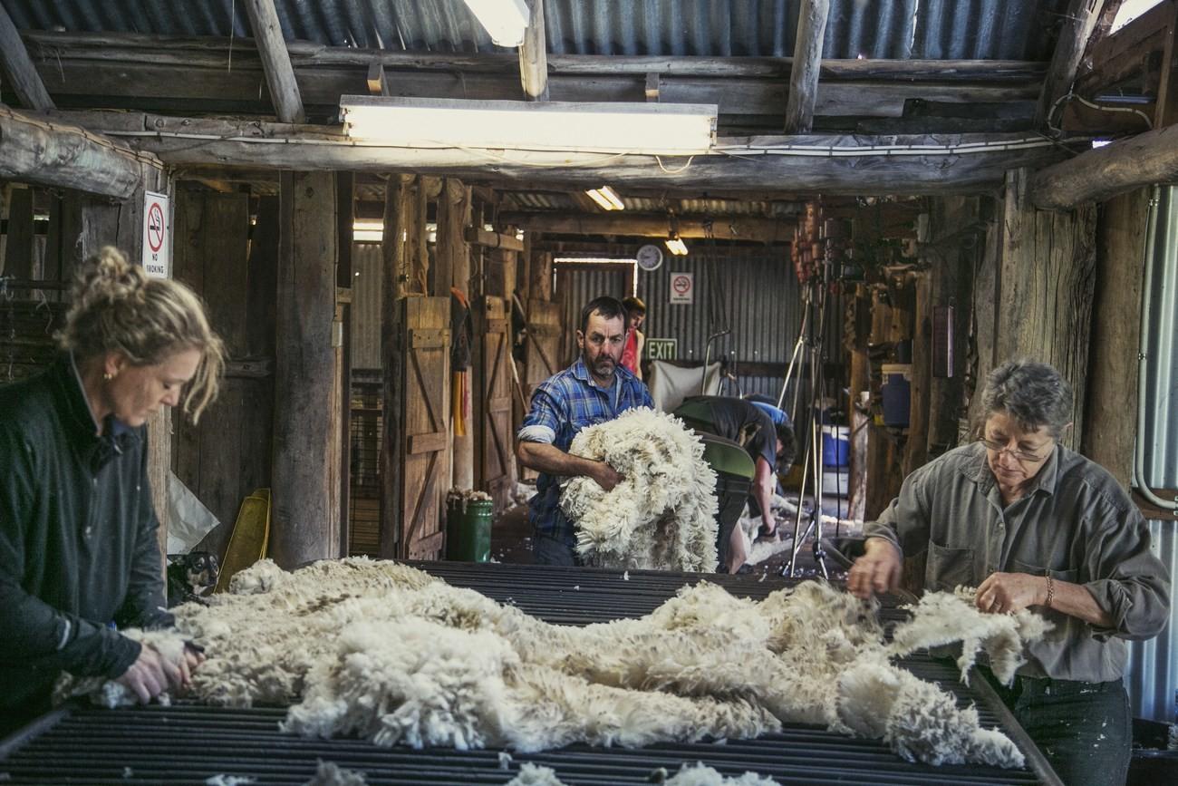 "Strategie pro kvalitu – koncept ""Sheep To Shop"" 9"