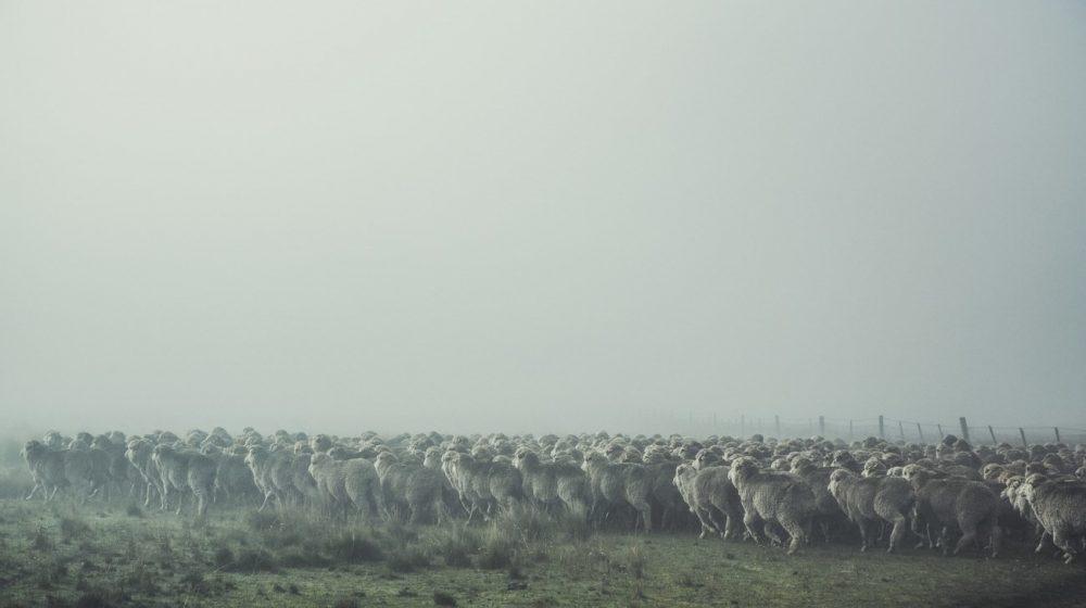 "Strategie pro kvalitu – koncept ""Sheep To Shop"" 2"