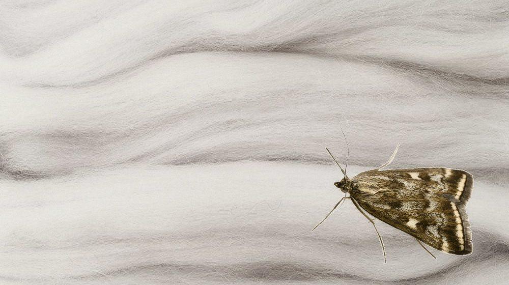 Vlna je pro moly jako afrodiziakum, umíte ji ochránit? 2
