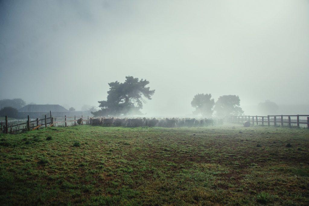 Naše farmy 2
