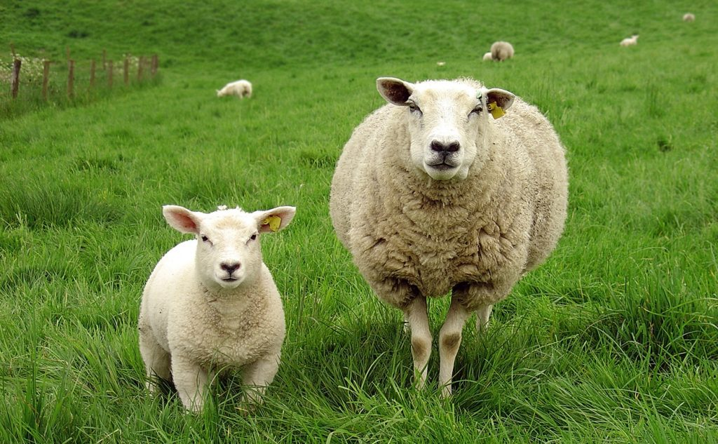Není wool jako wool 7