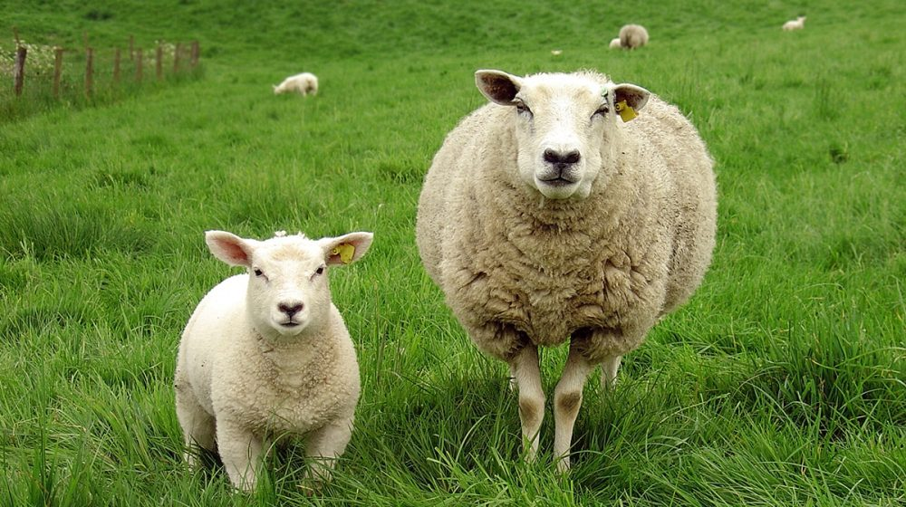 Není wool jako wool 2