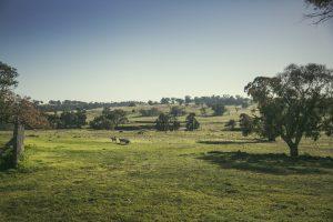 Naše farmy 5